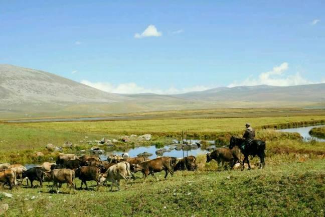 kuherde-kaukasus.jpg
