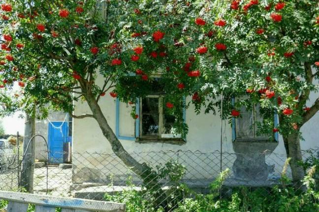 vogelbeerbaum-kaukasus.jpg