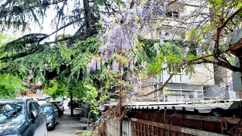Frühling in Tiflis